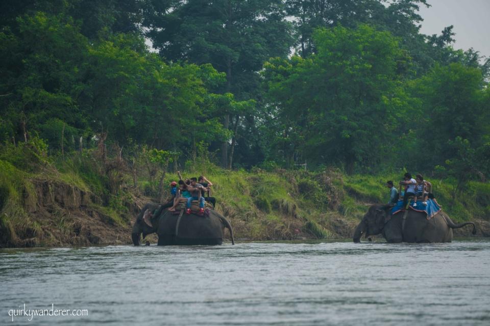 elephant safari chitin