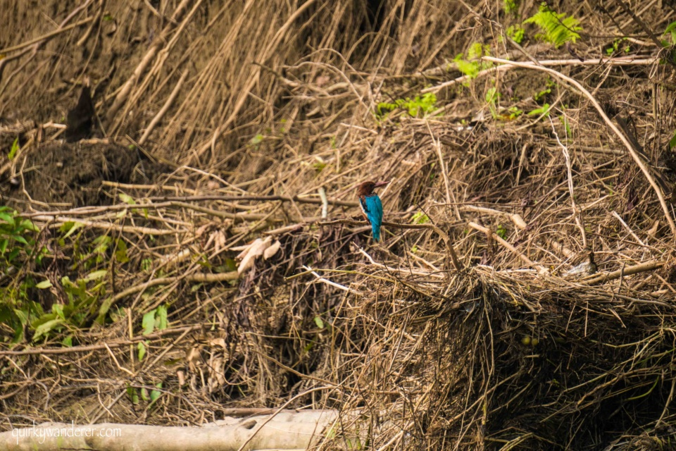 Types of Kingfishers