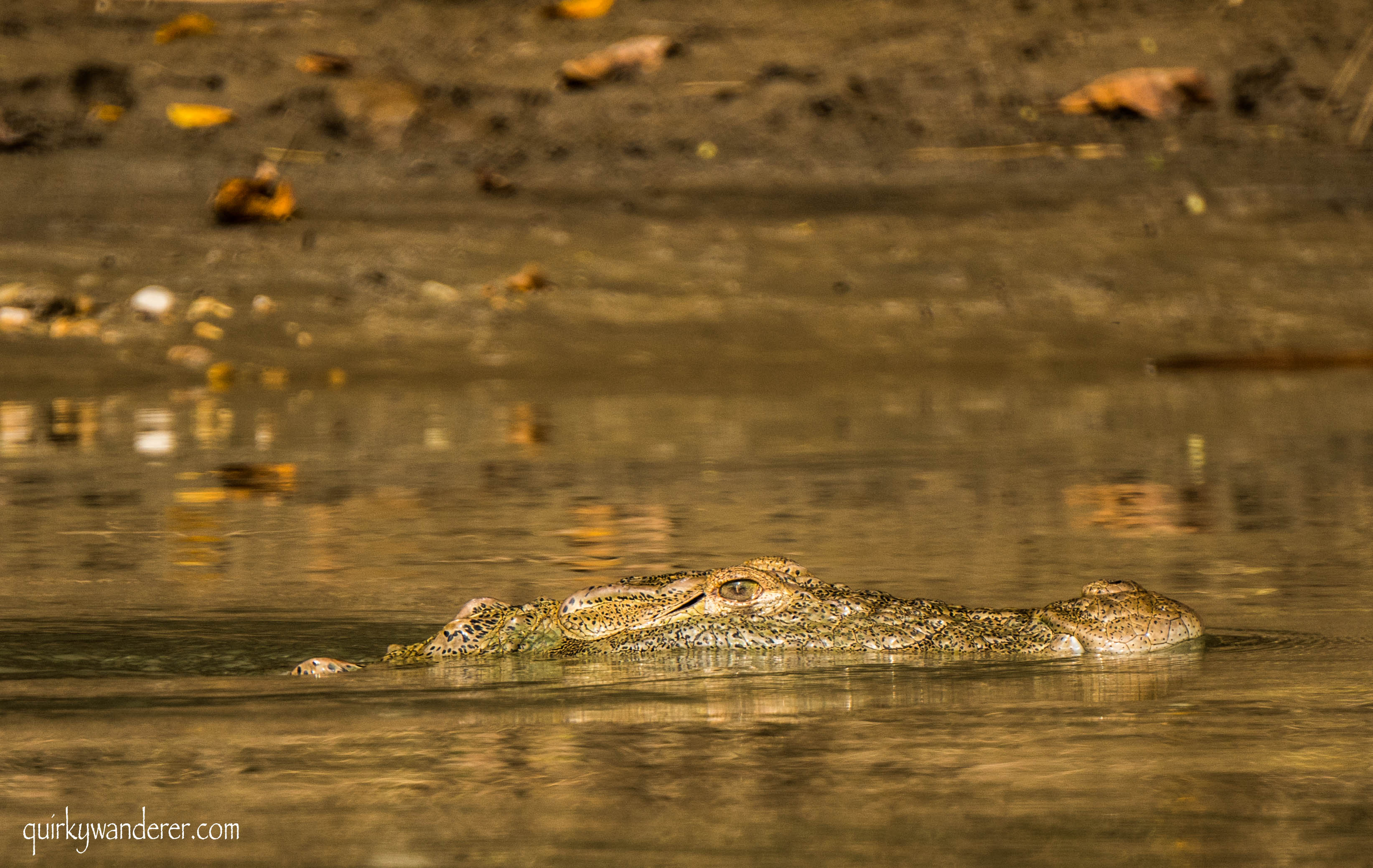 crocodiles in the Asia