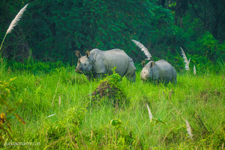 baby rhino in chitwan