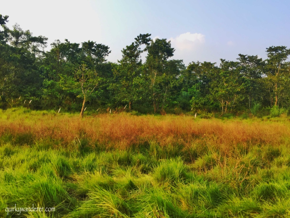 chitwan meadows