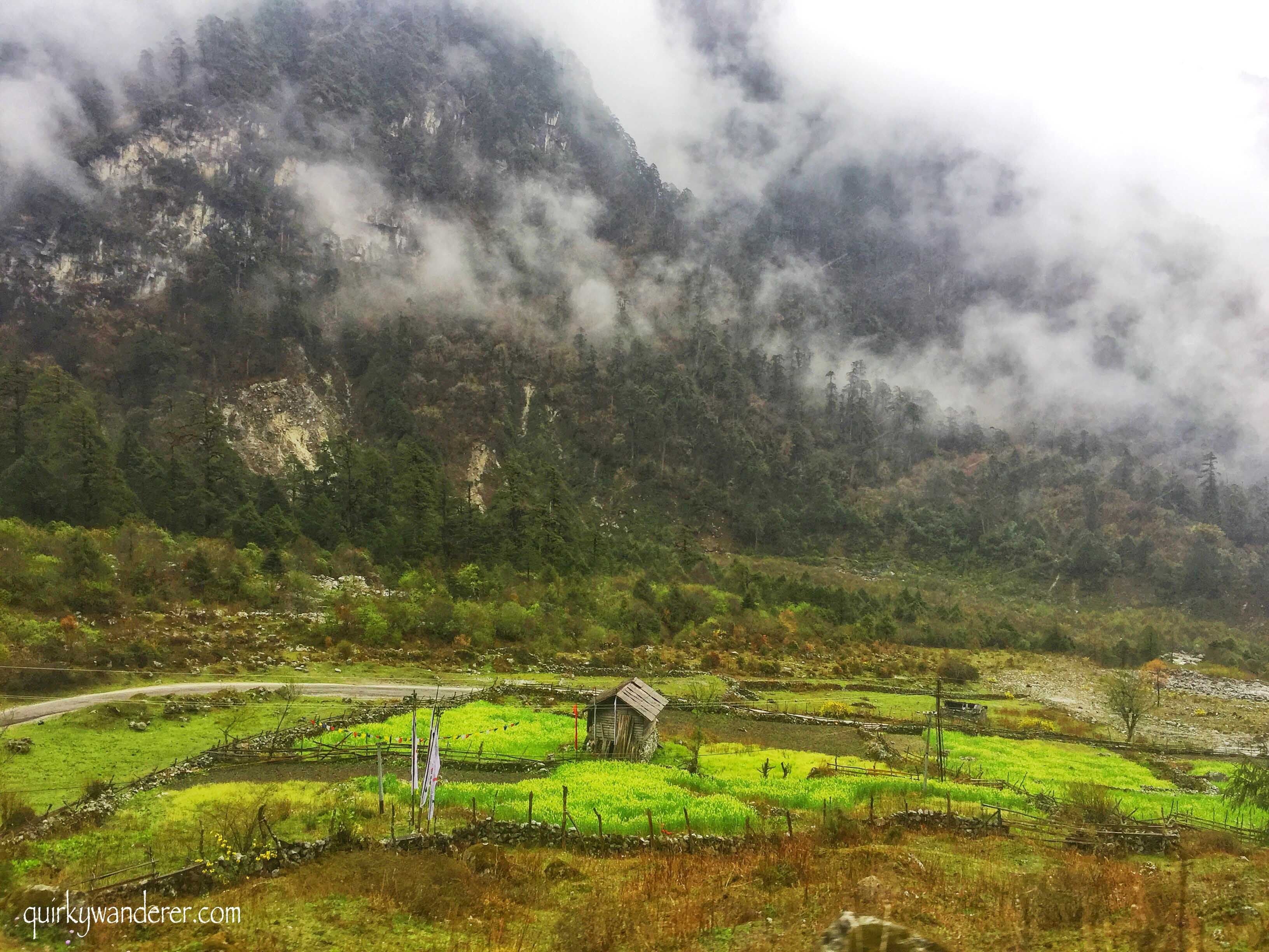 Yumthang valley in North Sikkim is known for its rhododendron blooms, dramatic scenery and the mighty Teesta river that flows in its scenic environs...