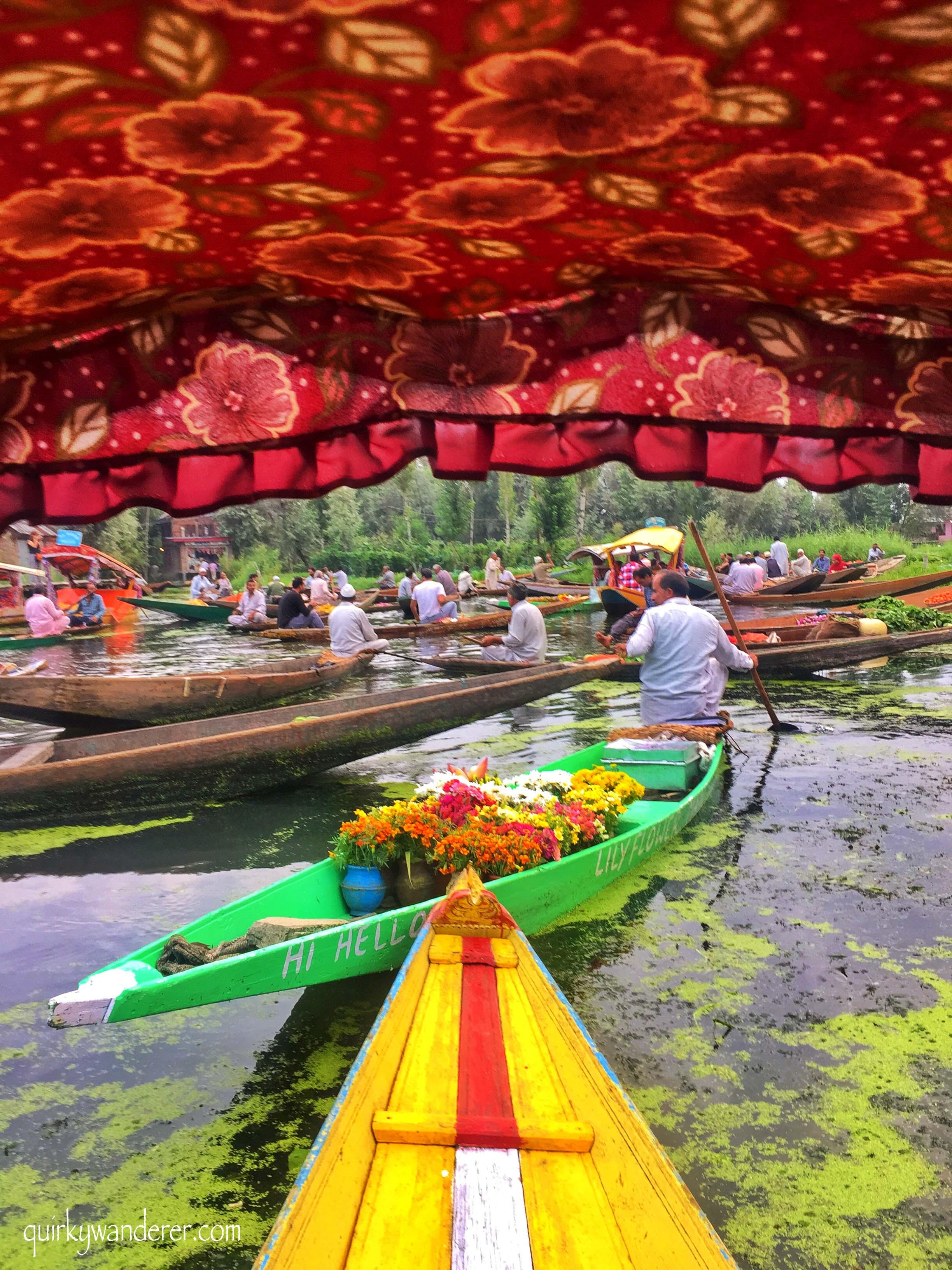 Shikara rides Dal lake Srinagar